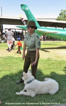 Open Day - 32 Brigada canina de Carabineros © Ricardo Farías O.