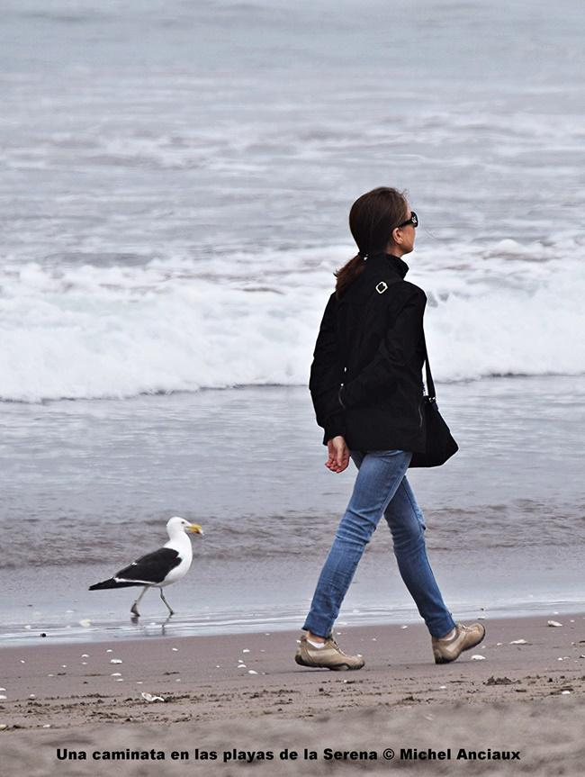 DSC_0182 Una caminata en las playas de la Serena © Michel Anciaux